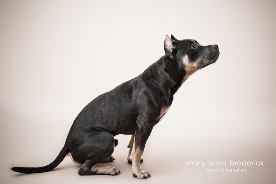 cute_dog_por_maryanne_broderick-16