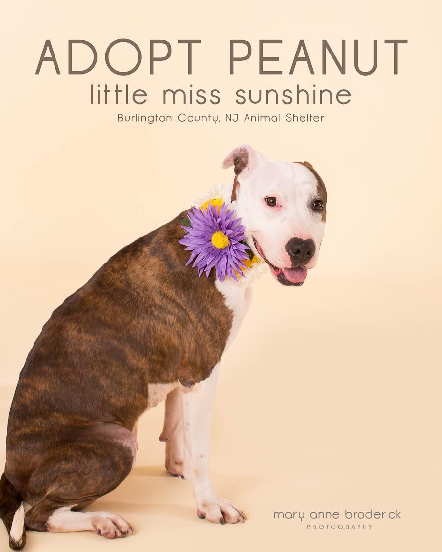 adopt_peanut-1