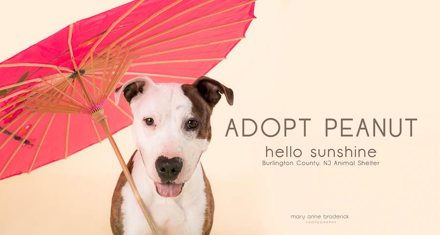 adopt_peanut-4