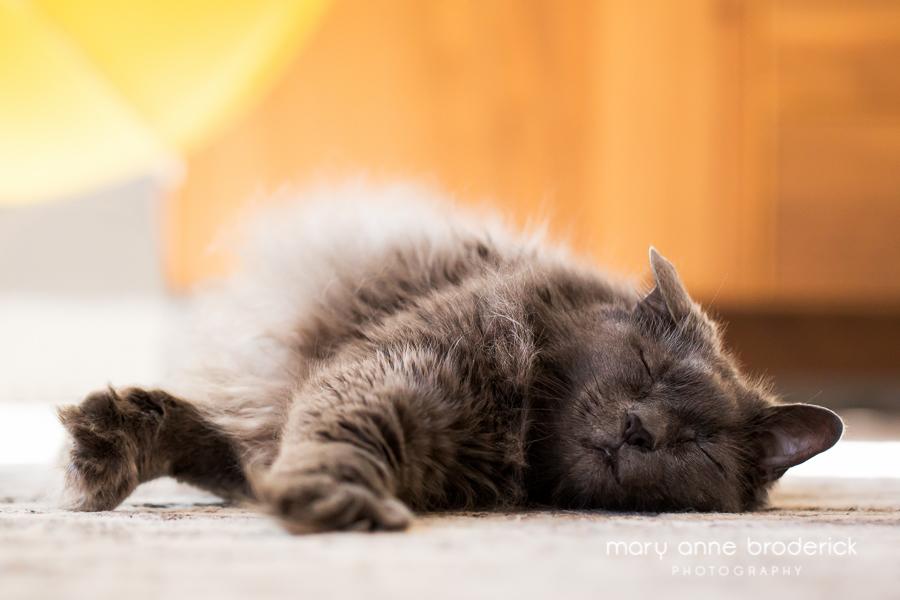 glatter_cats-17