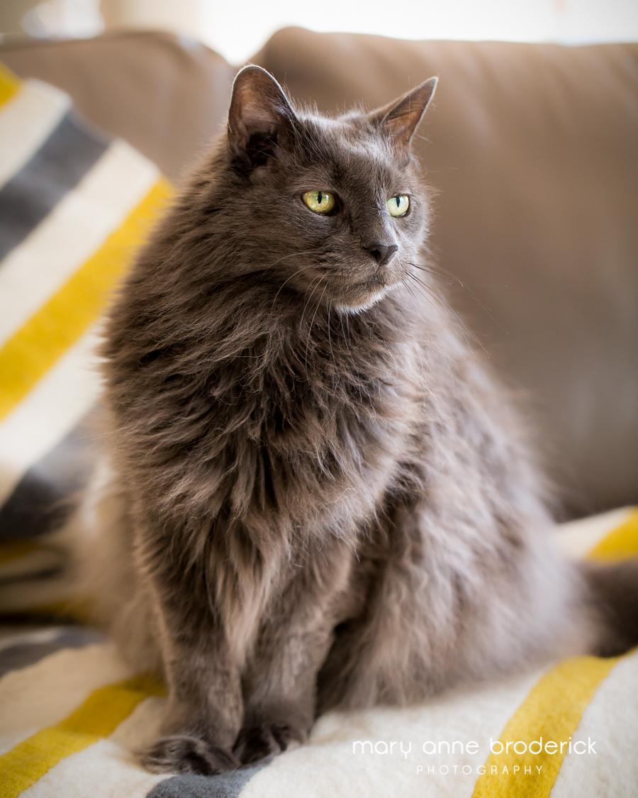 glatter_cats-20